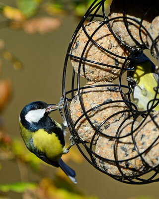 Copper Roof Suet Ball Feeder