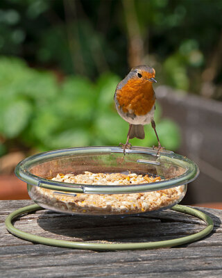 I Love Robins® Easy-Clean Treat Dish