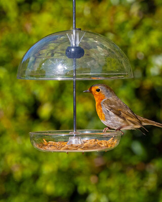 I Love Robins® Pearl Feeder