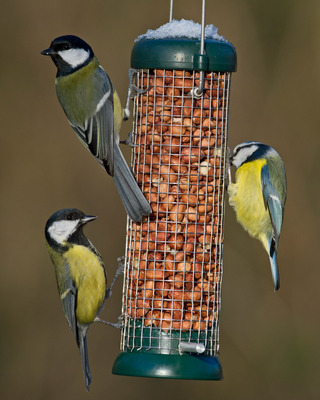 Buy Bird Lovers Peanut Feeder online from Living with Birds