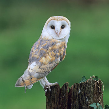 """Barn Owl"" - Players helping Players - Warframe Forums"