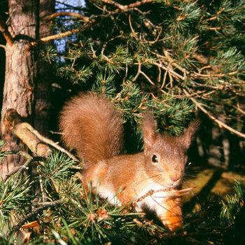 Fotos de animales de todo tipo incluyendo mascotas que más te gustan - Página 3 21-facts-on-squirrel-i1