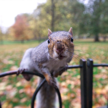 Fotos de animales de todo tipo incluyendo mascotas que más te gustan - Página 5 21-facts-on-squirrel-i2